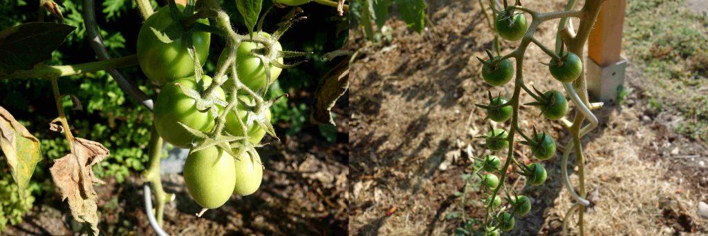 Garden Update In August