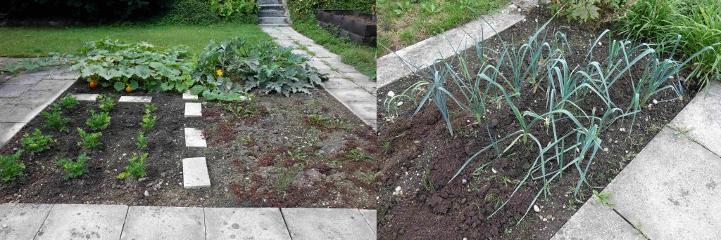Gartenupdate im September