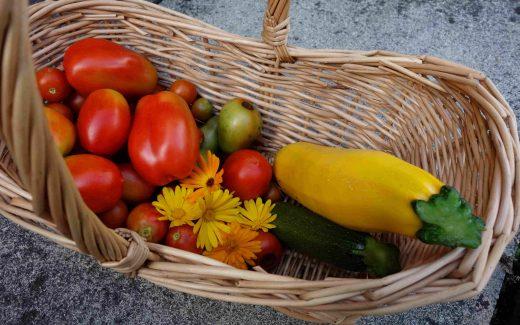 Gartenupdate im September, Garden Update in September