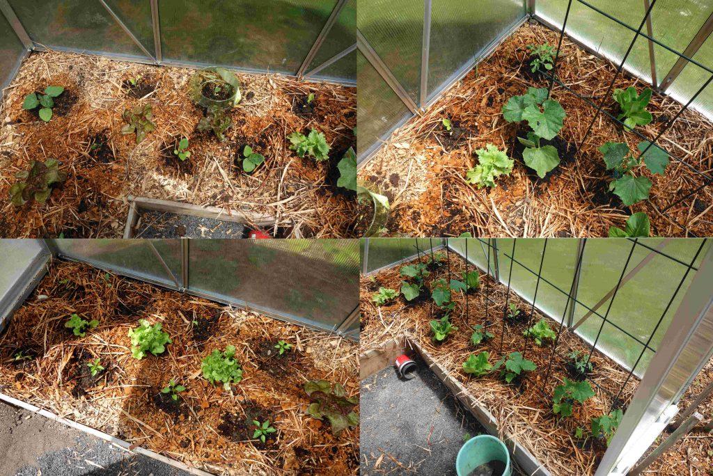 Gartenrundgang Juni