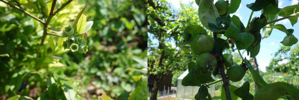 garden tour in june